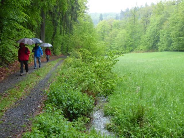 Ausweg aus dem Sonnenkult - Am Bach der Maichbacher Schweiz bei Usingen - Foto Georg Magirius