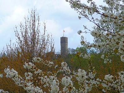 Burg Königstein im Frühling