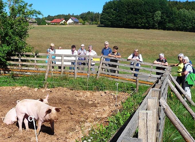 Die Spiritualität freilaufender Schweine - Foto von Georg Magirius