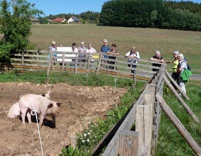 Hüpfende Schweine in Monbrunn - Foto von Georg Magirius