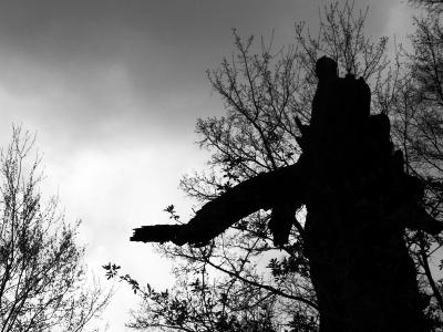 Hexenbaum auf dem Grottenweg bei Heigenbrücken