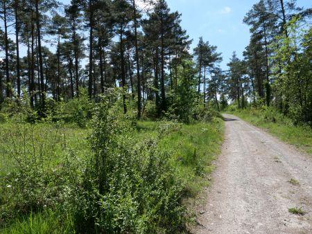 Stille in der Weinstadt Hammelburg - und im Kiefernwald oberhalb der Stadt