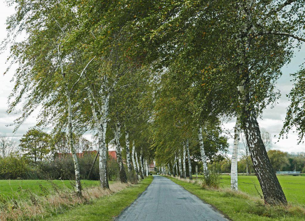 Überleben im Münsterland - Allee