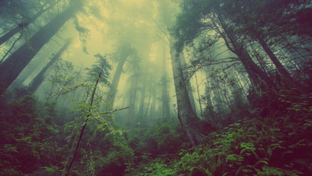 """Blick aus dem Grund eines Waldes steil nach oben, an wilden Bäumen entlang. Oben ist nebelartiges Licht zu sehen. Es wirkt wie eine Seelenlandschaft, der man den Titel geben kann """"Mit Gott ums Leben kämpfen""""."""