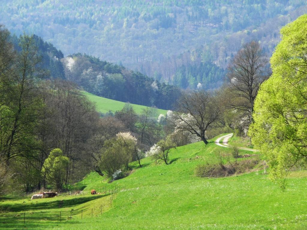 """Die Gabe des Weglassens - sie lässt sich zum Beispiel erfahren im Reuenthal im Odenwald. Und im Buch """"Frankenglück"""" von Georg Magirius, meint die Frankfurter Allgeimeine Zeitung."""
