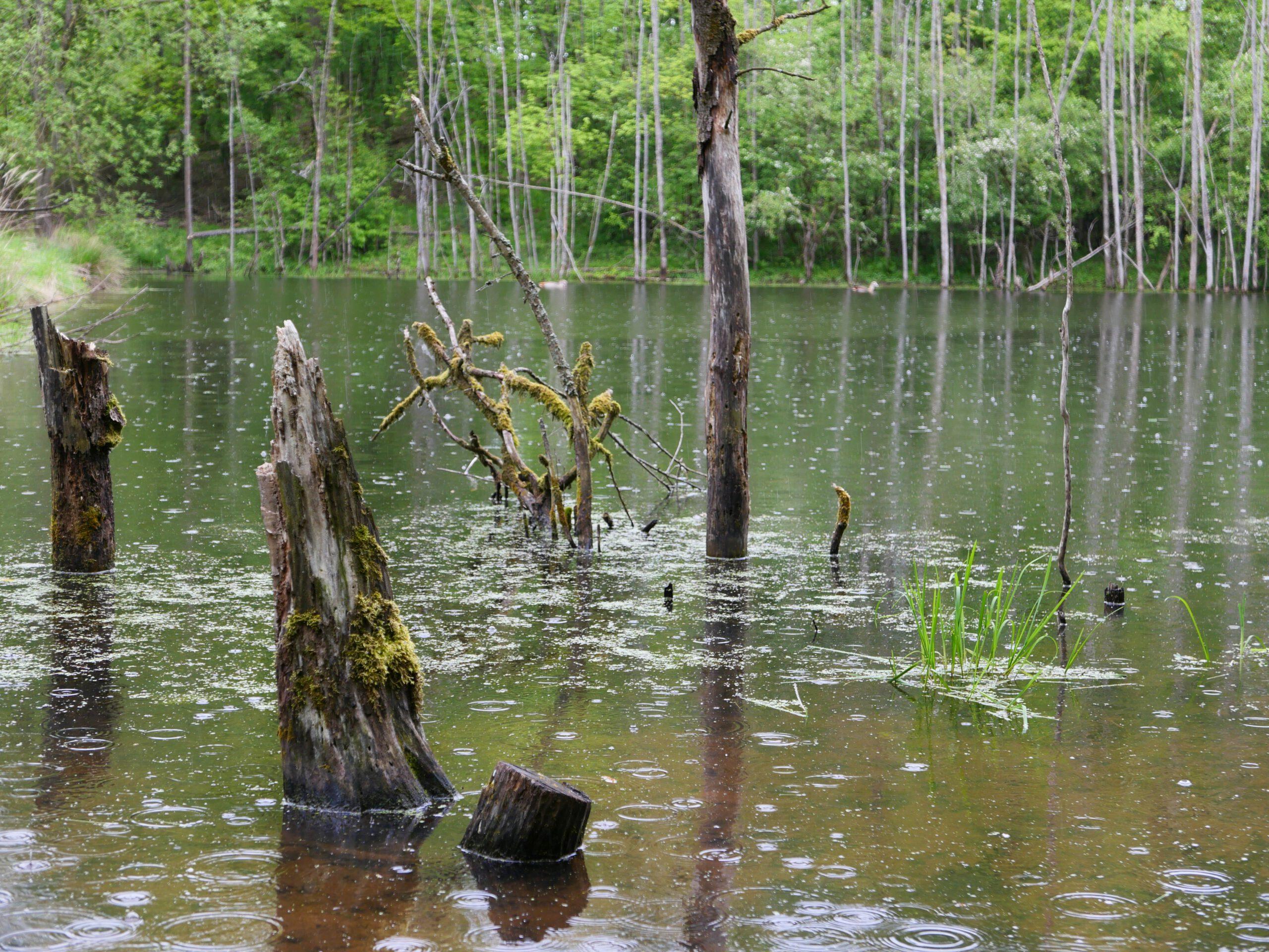 Wer sich auf die Reise bis an Ende der Welt begibt, kann ihn entdecken: Der Waldteich bei Irmelshausen. - Foto von Georg Magirius