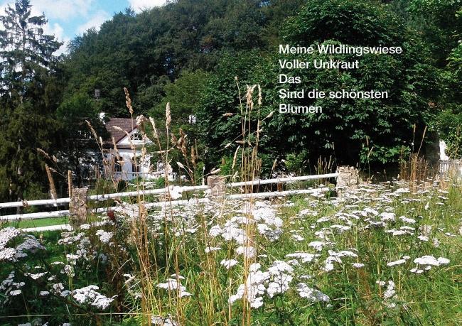 Wildlingswiese - Bildgedicht von Ilka Scheidgen