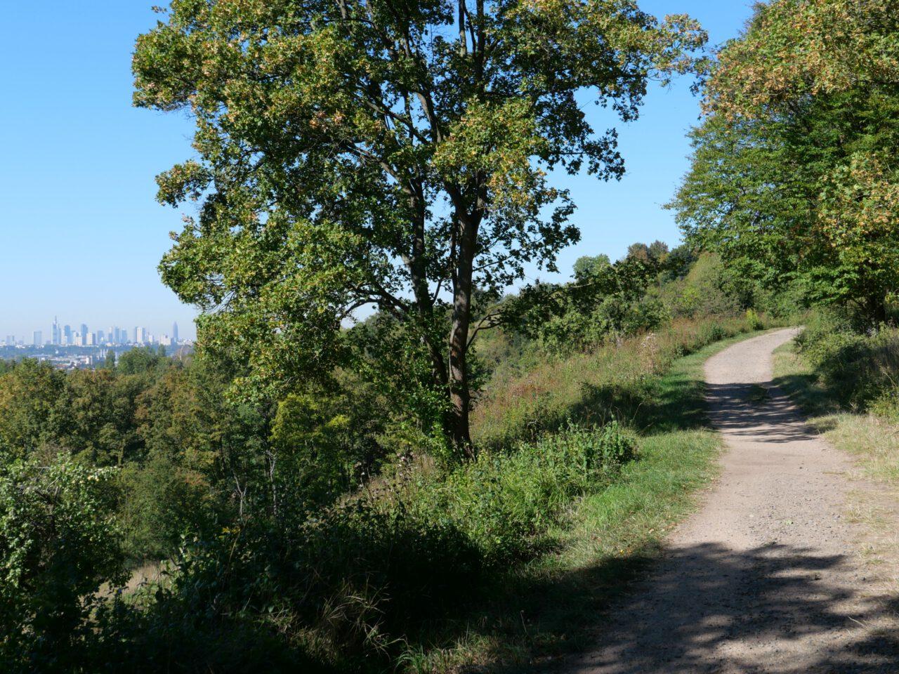 Leicht hinauf ins Freie führt der Höhenweg am Berger Südhang