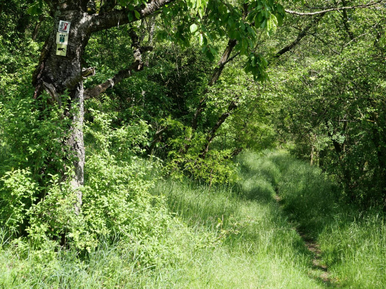 Eigene Fußspuren setzen - Burgenweg bei Prappach