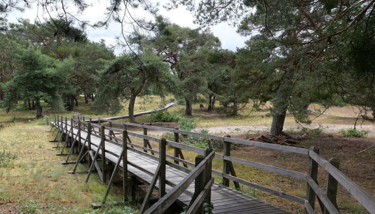 Bohlenweg - Schwanheimer Düne - wohltuend in Coronazeiten