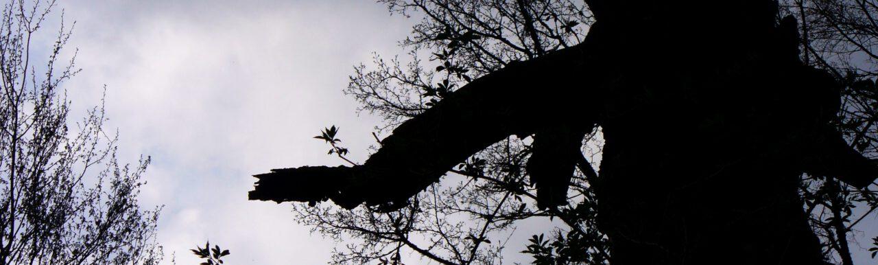 Urlaub daheim am Hexenbaum