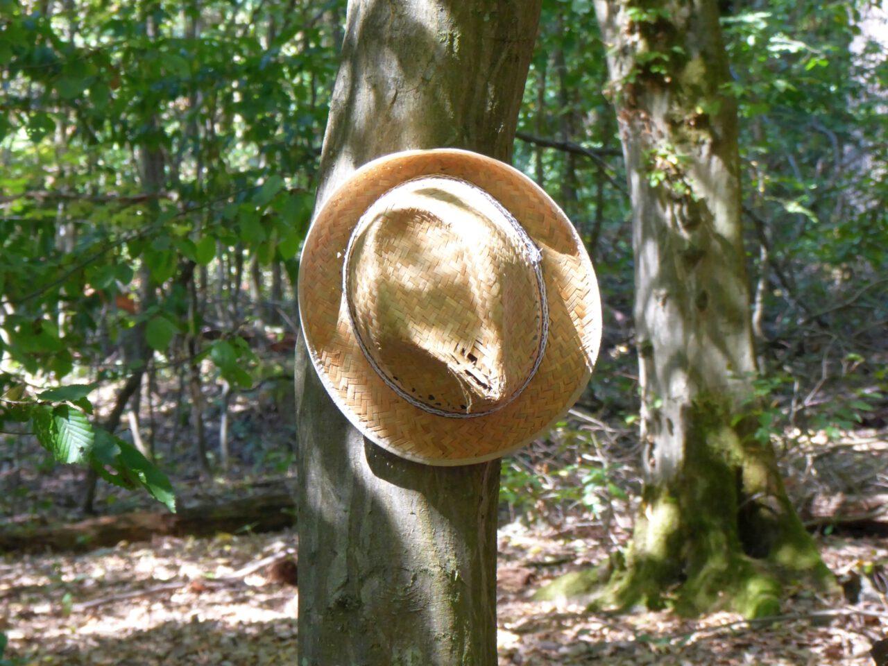 Meditieren mit offenen Augen und dem Recht auf Pausen - Sonnenhut im Frankfurter Stadtwald
