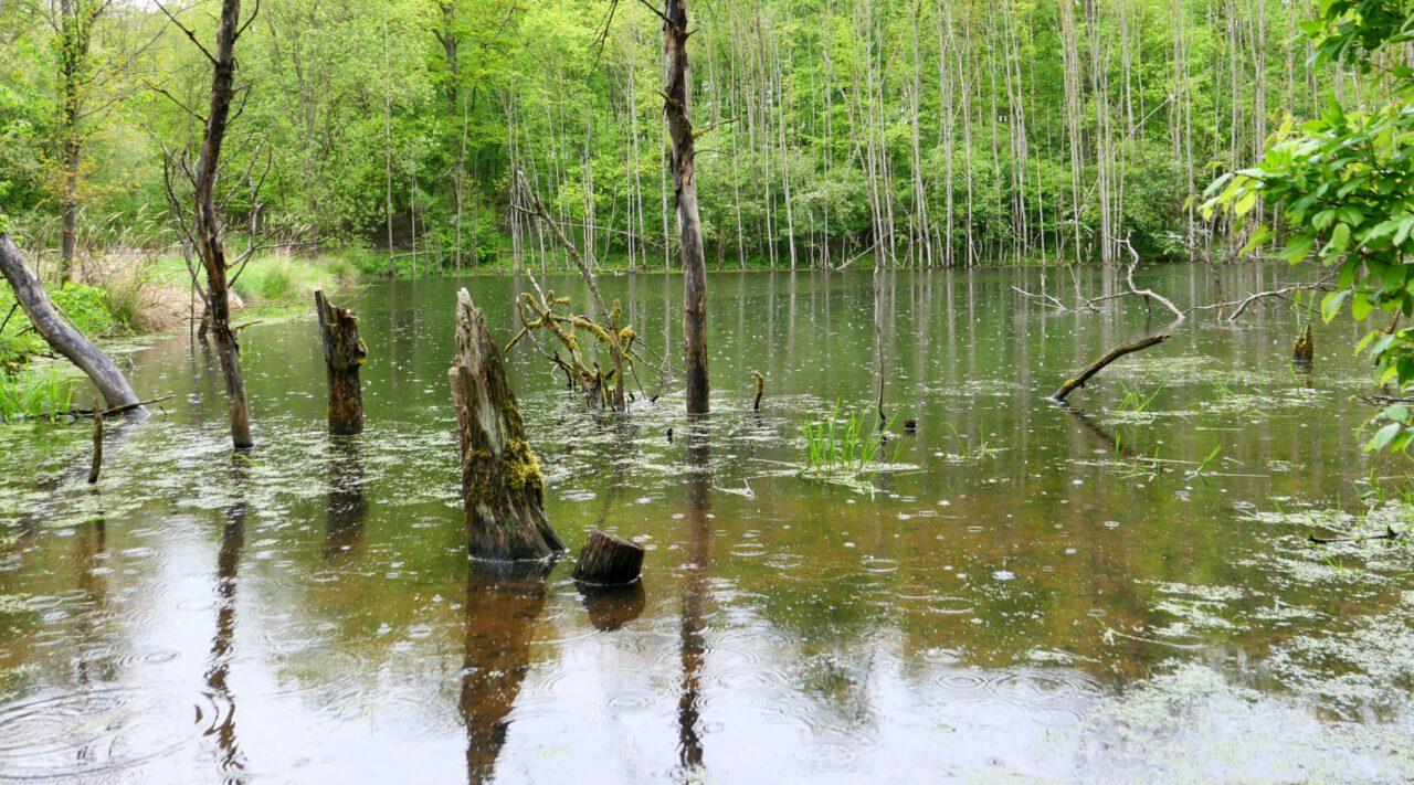 Versteckes Waldparadies bei Irmelshausen am Grünen Band