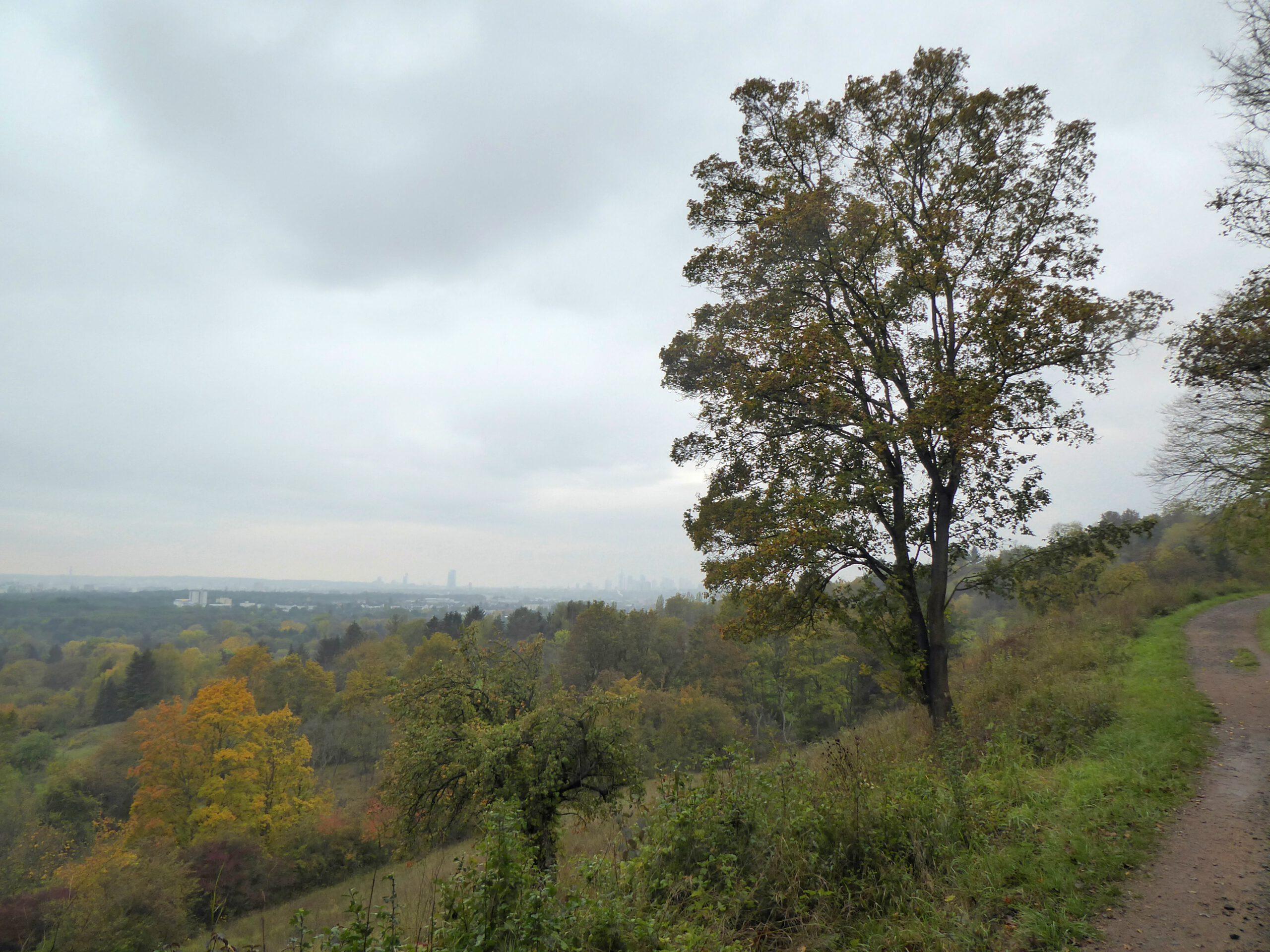 Blick in Richtug Skyline - Berger Hang