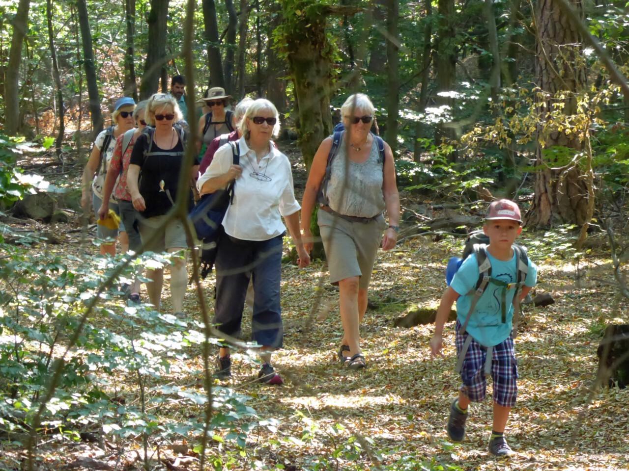Meditieren mit offenen Augen - Stille Wanderung durch den Frankfurter Stadtwald