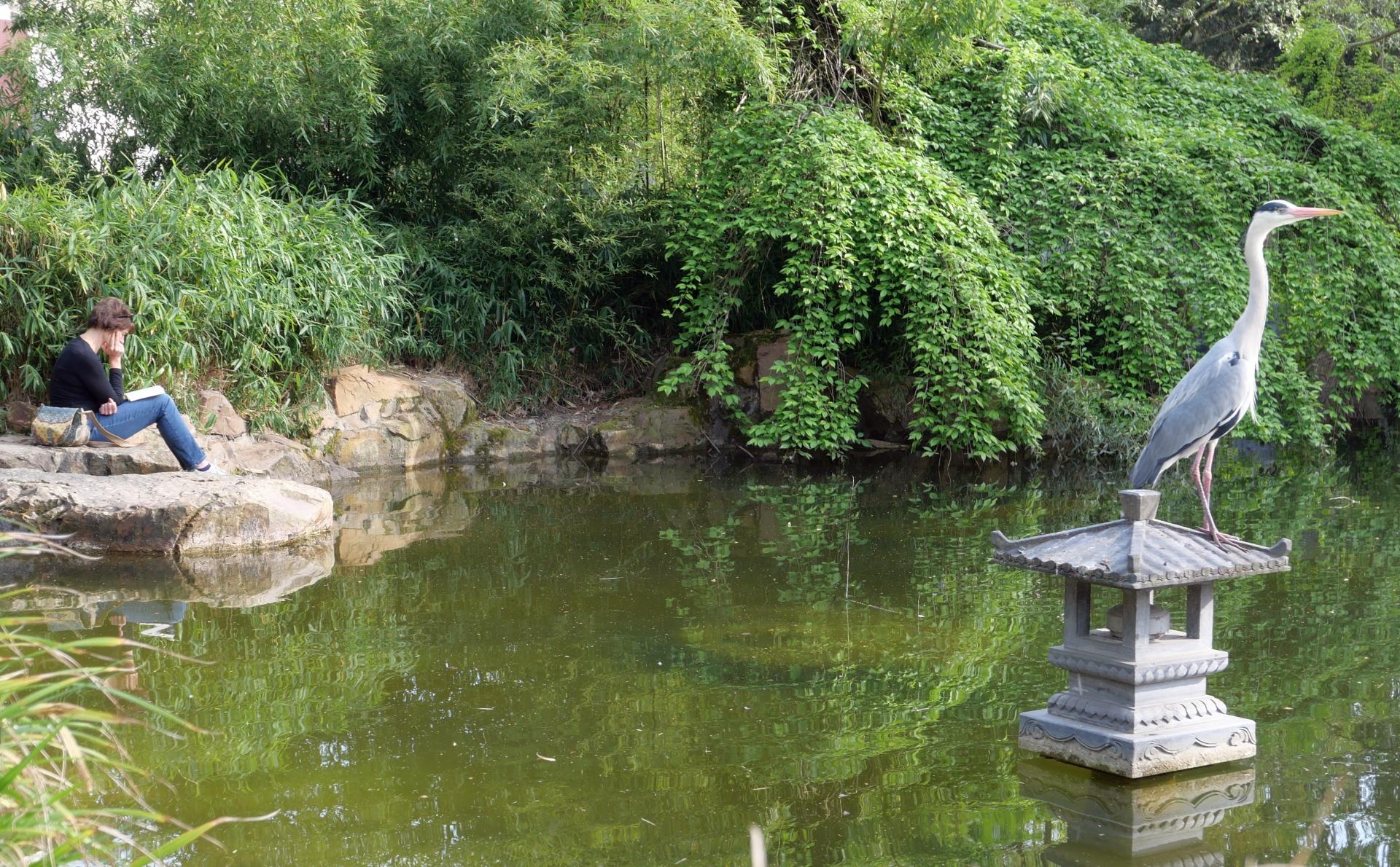 Synchronmeditation im Chinesischen Garten im Frankfurter Bethmannpark: Das In-sich-Ruhen von Mensch und Tier wirken auf verblüffende Weise aufeinander abgestimmt.