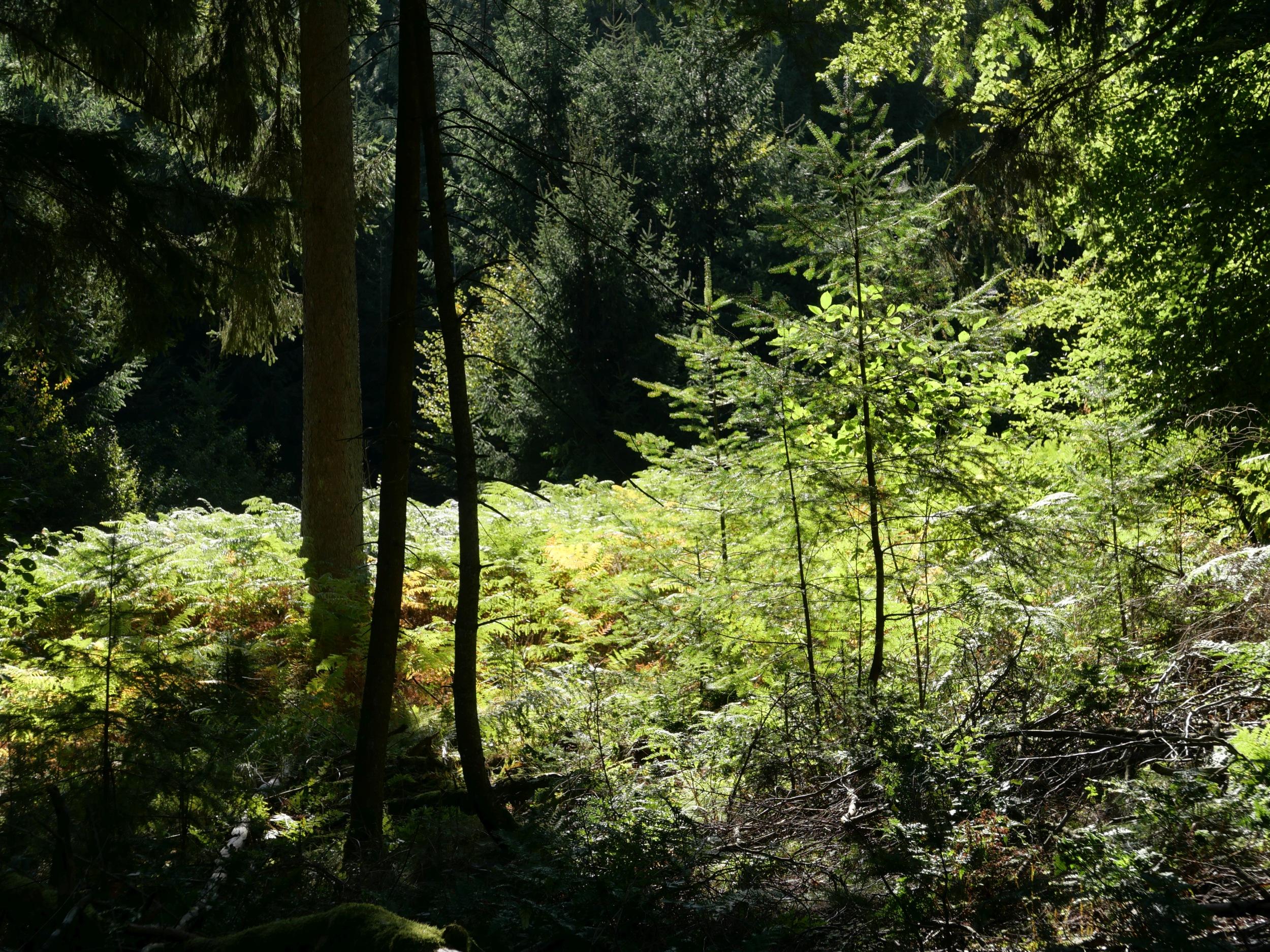 Urlaub daheim am Hexenbaum - und damit im sagenhaften, waldreichen Spessart -