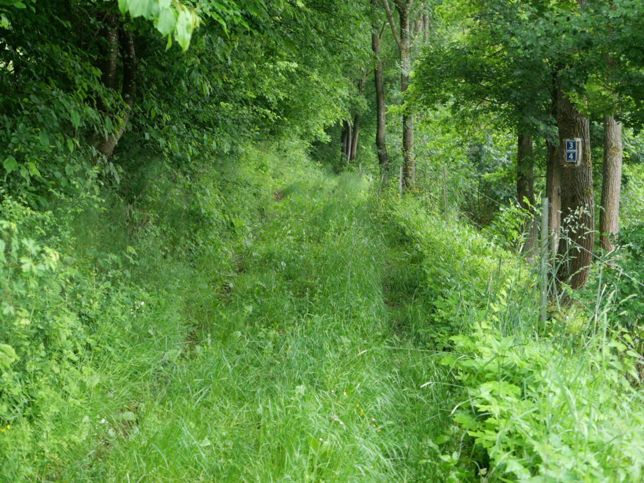 Einge Fußspuren setzen - zum Beispiel bei Morlesau-Ochsentahl